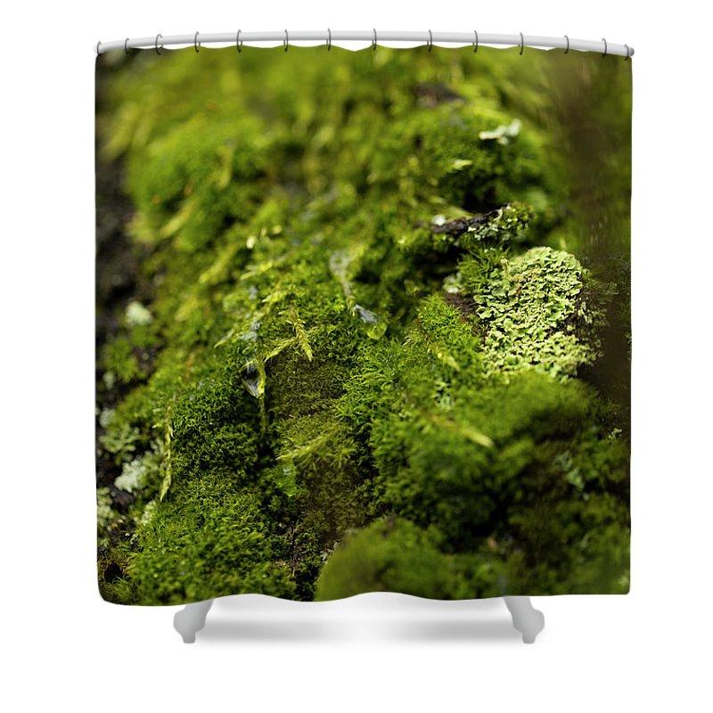 Hessen Shower Curtain featuring the photograph Closeup Of Moss And Lichen. Rhoen by Sebastian Kujas
