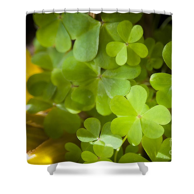 Background Shower Curtain featuring the photograph Clover by Tim Hester