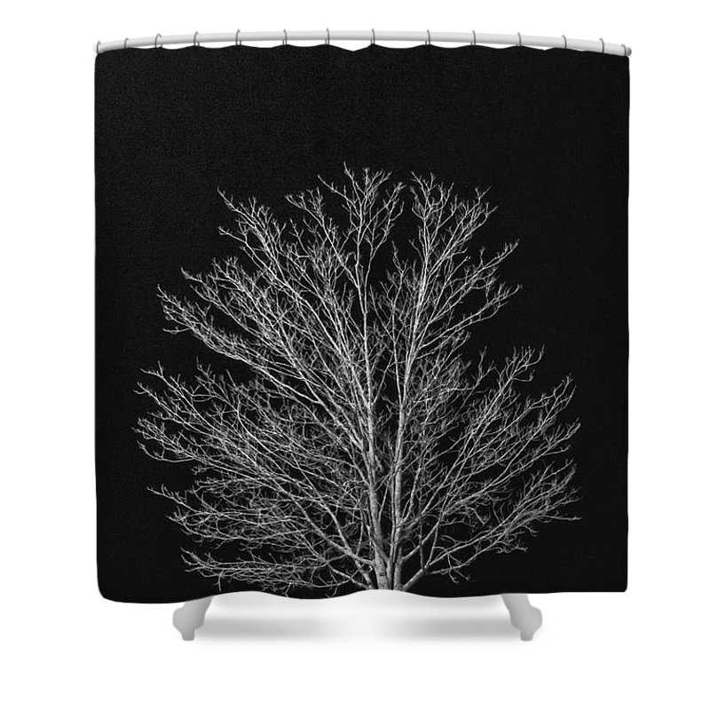 Tree; Single; Big; Dead; Empty; Countryside; Country; Outdoors; Outside; One; Landscape; Rural; Winter; Autumn; Fall; Alone; Desolate; Deserted; Empty; Emptiness; Isolated; Lone; Sole; Dark; Darkness; Ominous; Foreboding; Black; Monochrome; White; Season; No Leaves; Stark; Cold Shower Curtain featuring the photograph Cold And Lonely by Margie Hurwich