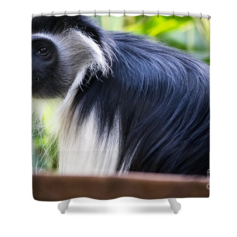 Colobus Monkey Shower Curtain featuring the photograph Colobus Monkey by Suzanne Luft