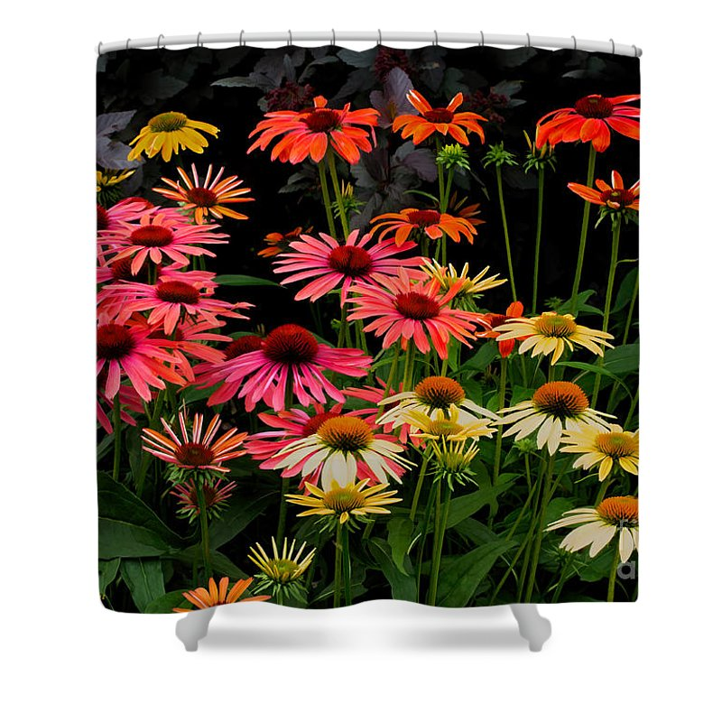 Coneflower Shower Curtain featuring the photograph Coloratura by Barbara McMahon