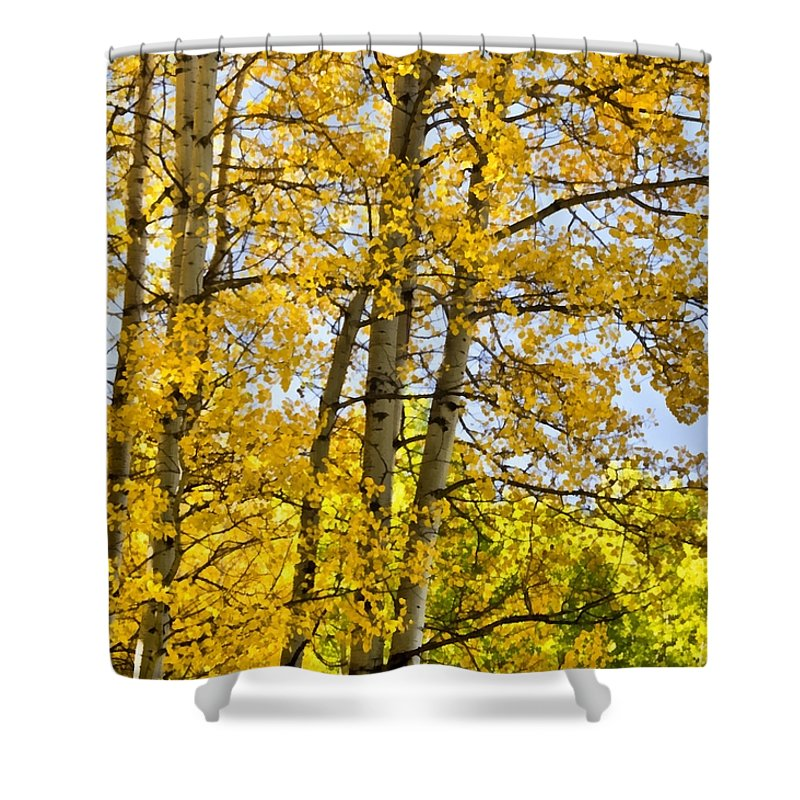 Colorado Shower Curtain featuring the photograph Colorado Fall Aspens 2 by Angelina Vick