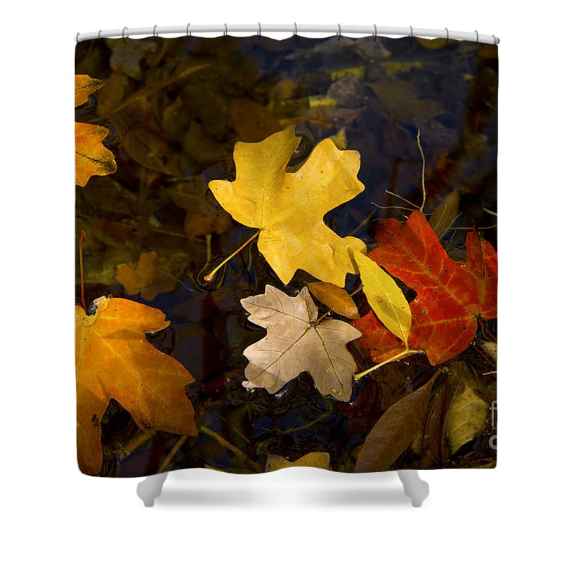 Guadalupe Mountains National Park Texas Parks Fall Autumn Leaf Maple Leaves Water Still Life Shower Curtain featuring the photograph Colored Floaters by Bob Phillips