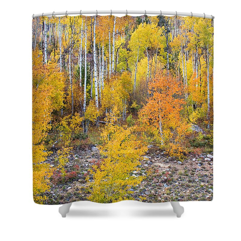 Autumn Shower Curtain featuring the photograph Colorful Autumn Forest In The Canyon Of Cottonwood Pass by James BO Insogna
