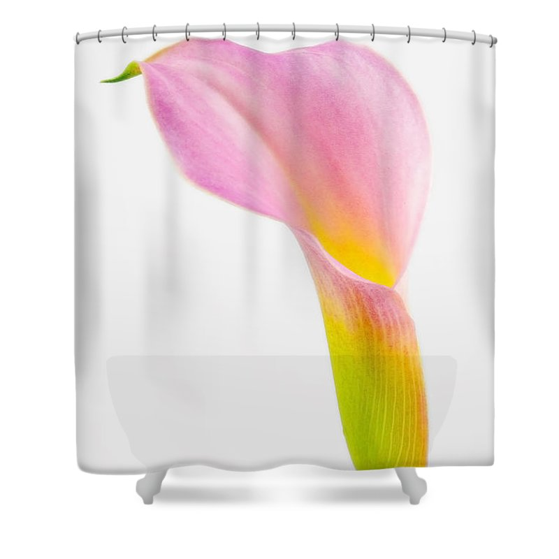 Calla Lily; Flower; Plant; Bloom; Vertical; Single; Photo; Photography; Colorful; Pink; Yellow; Green Shower Curtain featuring the photograph Colorful Calla Lily Flower by Richard J Thompson