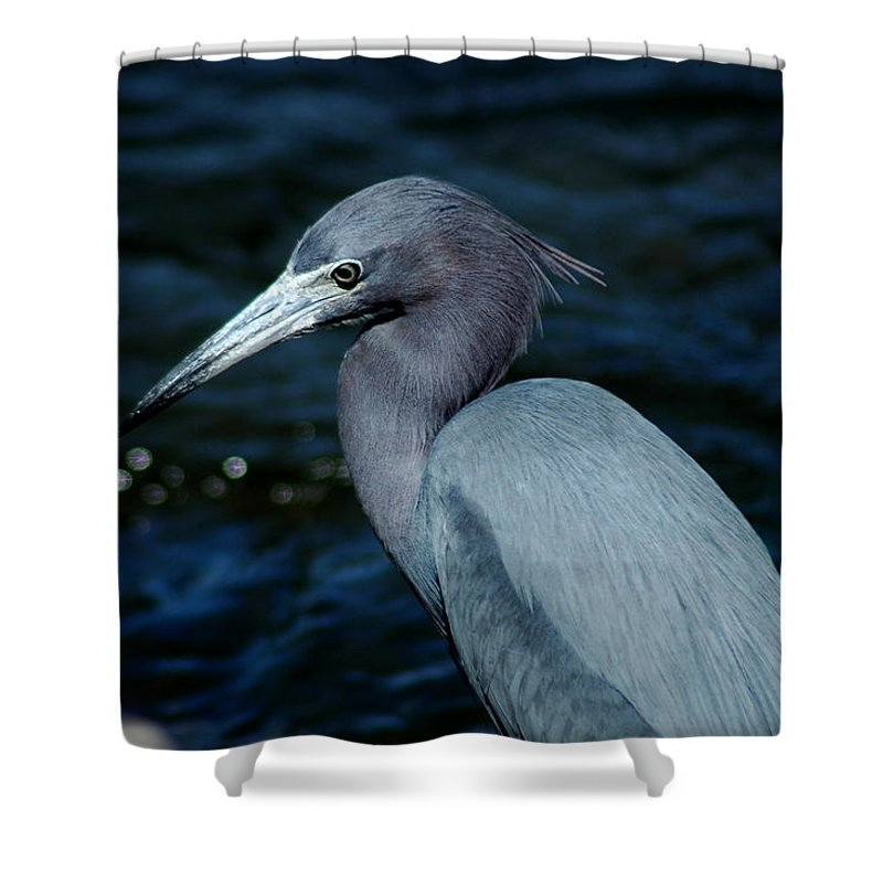 Egret Shower Curtain featuring the photograph Colorful Egret Of Sanibel by David Weeks