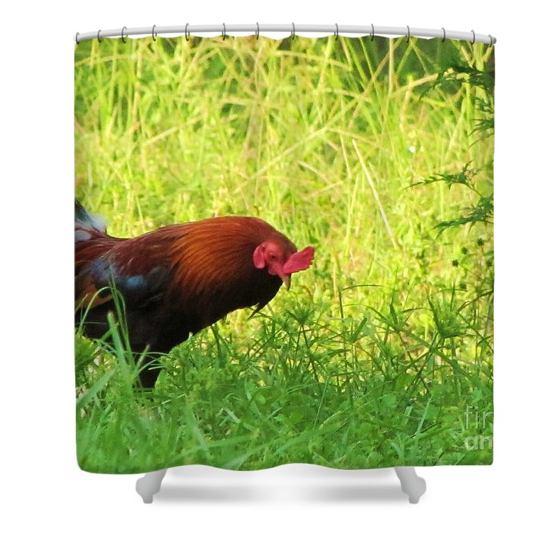Chicken Shower Curtain featuring the photograph Colorful Rooster by Michelle Powell