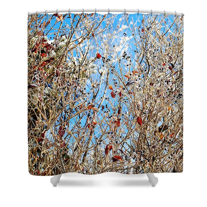 Winter Shower Curtain featuring the photograph Colorful Winter Wonderland by Frozen in Time Fine Art Photography