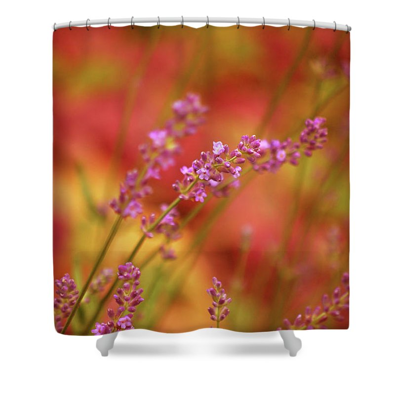 Flowers Shower Curtain featuring the photograph Colors I Love by Lori Tambakis