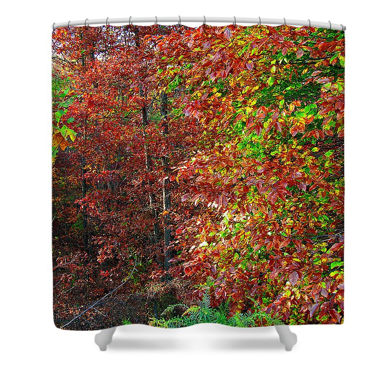 Nature Shower Curtain featuring the photograph Colors Of Fall 4 by Earl Johnson