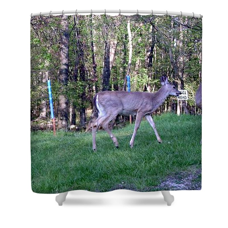 Deer Prints Shower Curtain featuring the photograph Come On Lets Play by R A W M