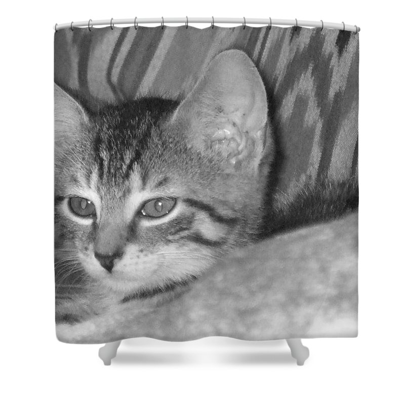 Kitten Shower Curtain featuring the photograph Comfy Kitten by Pharris Art