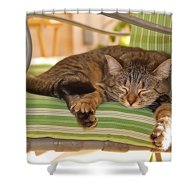 Cat Shower Curtain featuring the photograph Comfy Kitty by Aimee L Maher ALM GALLERY