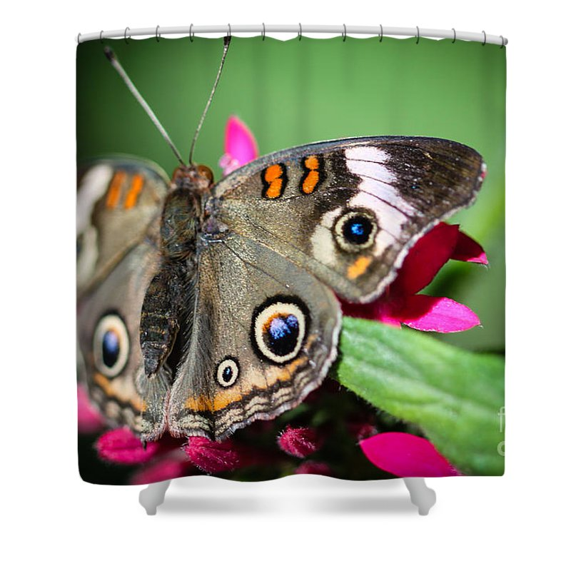 Butterfly Shower Curtain featuring the photograph Common Buckeye Junonia Coenia by Henrik Lehnerer