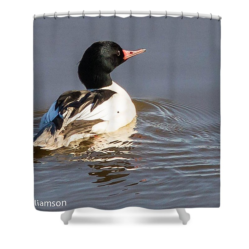 Ducks Shower Curtain featuring the photograph Common Menganser by Brian Williamson