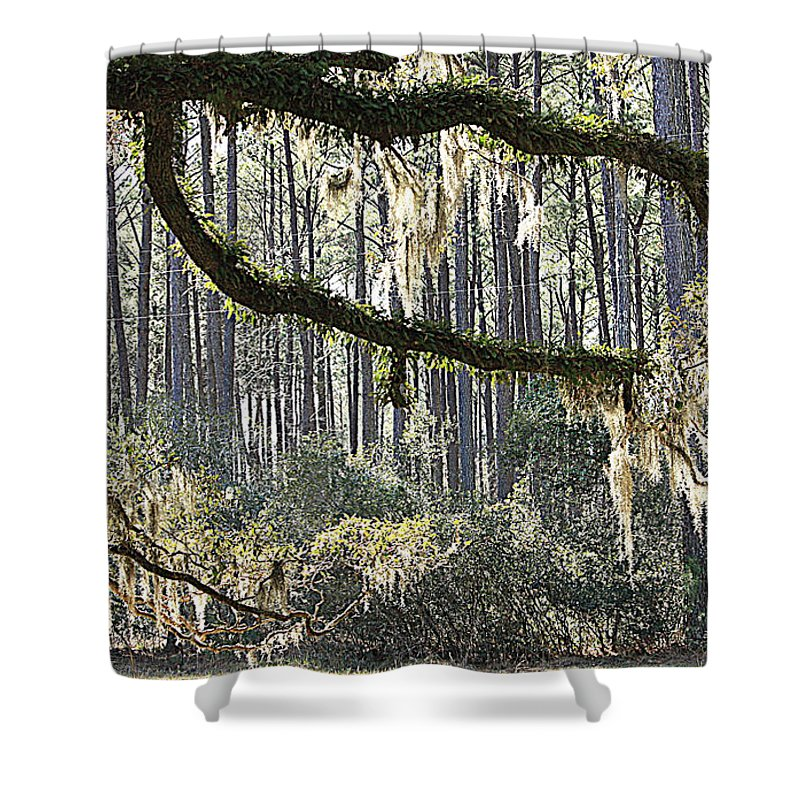 Live Oak Shower Curtain featuring the photograph Companions by Carol Groenen