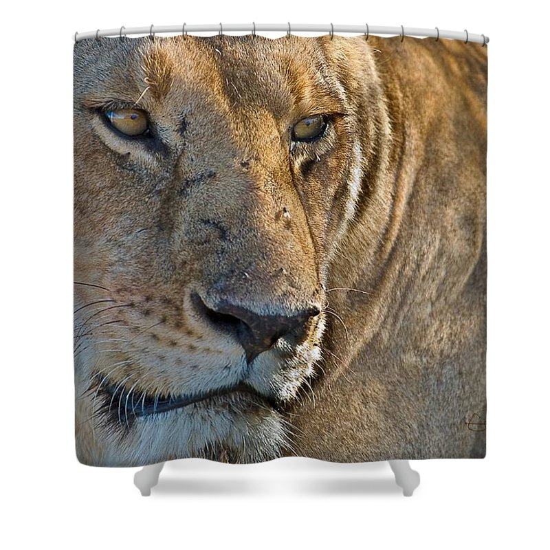 Africa Shower Curtain featuring the photograph Concentration by Colette Panaioti