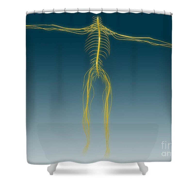 Yellow Shower Curtain featuring the digital art Conceptual Image Of Human Nervous by Stocktrek Images