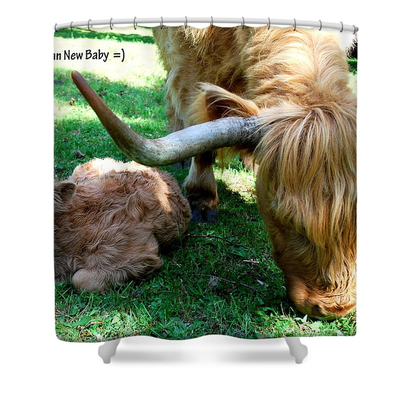 Cow Shower Curtain featuring the photograph Congrat's by Kathy Sampson