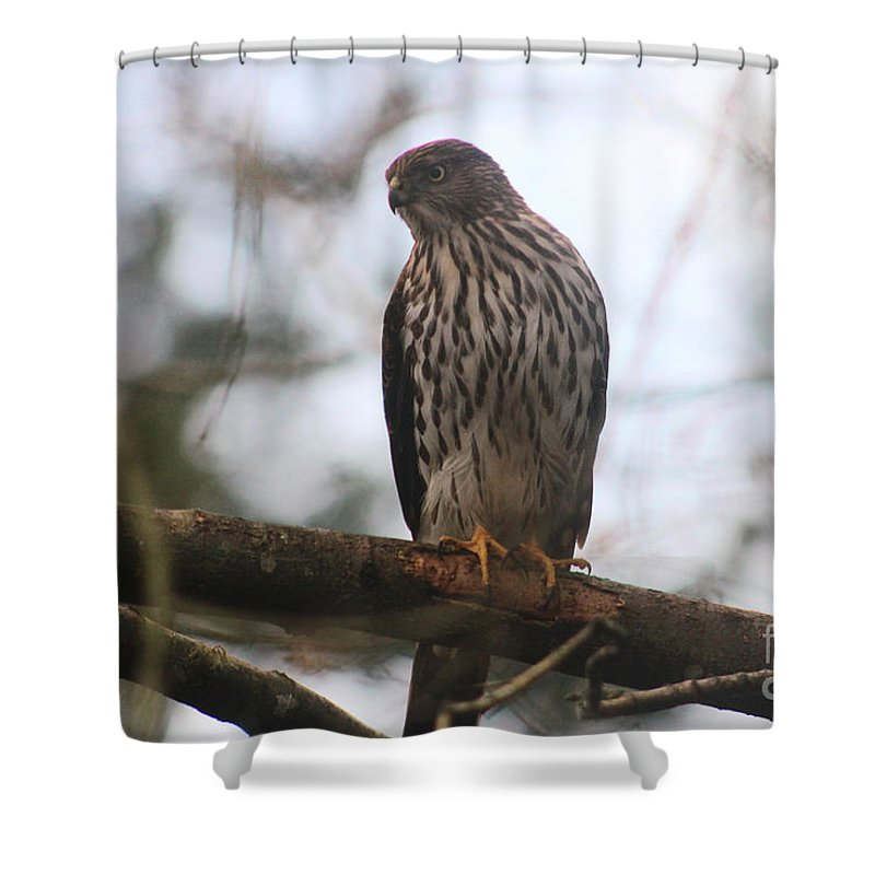 Animals Shower Curtain featuring the photograph Cooper's Hawk Dines Here by Kym Backland