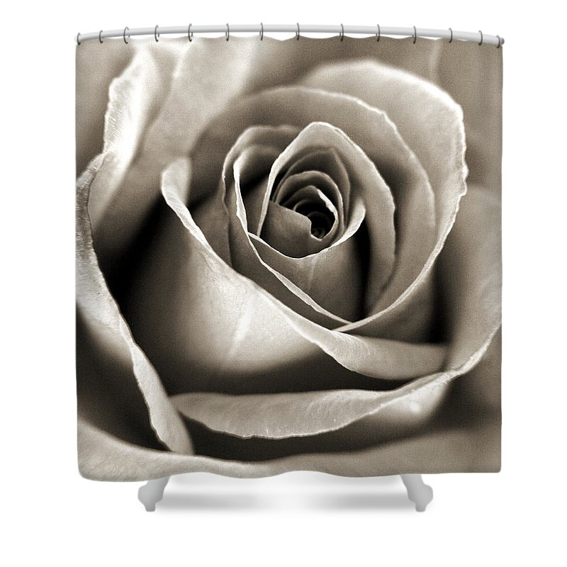 Photography Shower Curtain featuring the photograph Copper Rose by Jackie Farnsworth