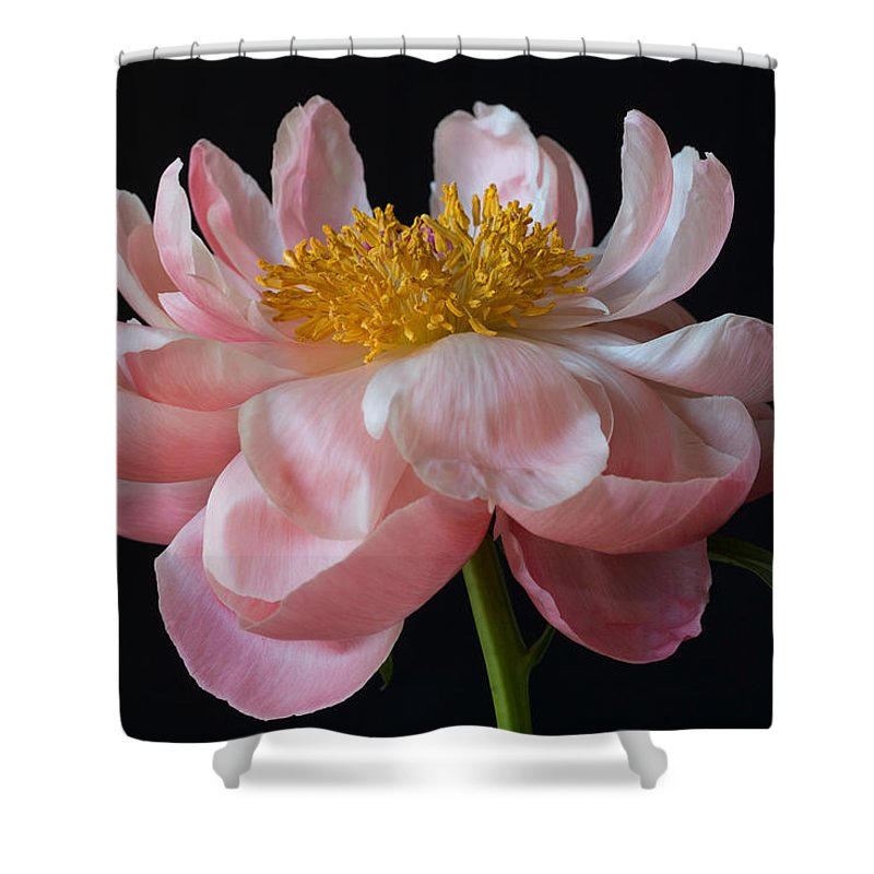 Peony Shower Curtain featuring the photograph Coral Peony by Kim Aston