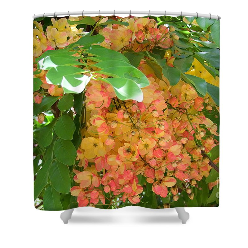 Shower Tree Shower Curtain featuring the photograph Coral Shower Tree by Mary Deal