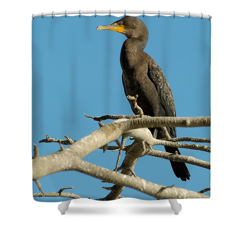 Cormorants Shower Curtain featuring the photograph Cormorant by Sebastian Musial