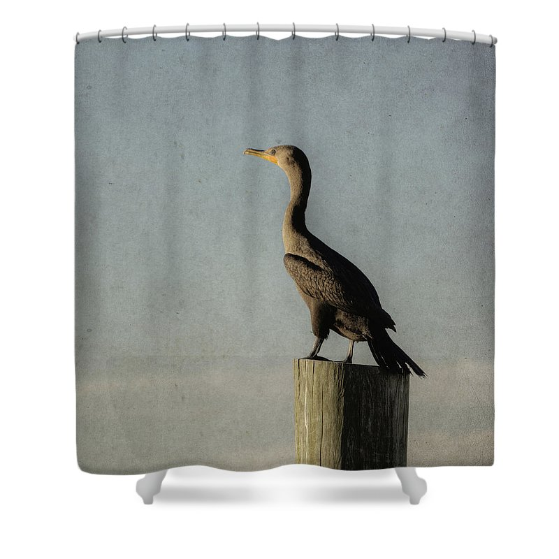 Bird Shower Curtain featuring the photograph Cormorant by Steve Gravano