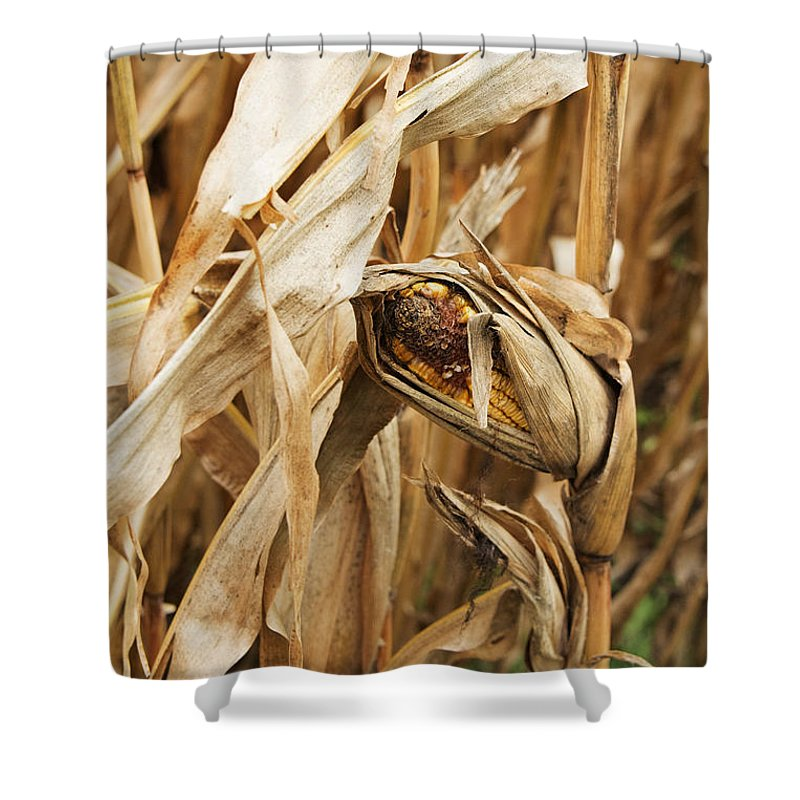 Corn Shower Curtain featuring the photograph Corn On The Cob by Jayne Gohr