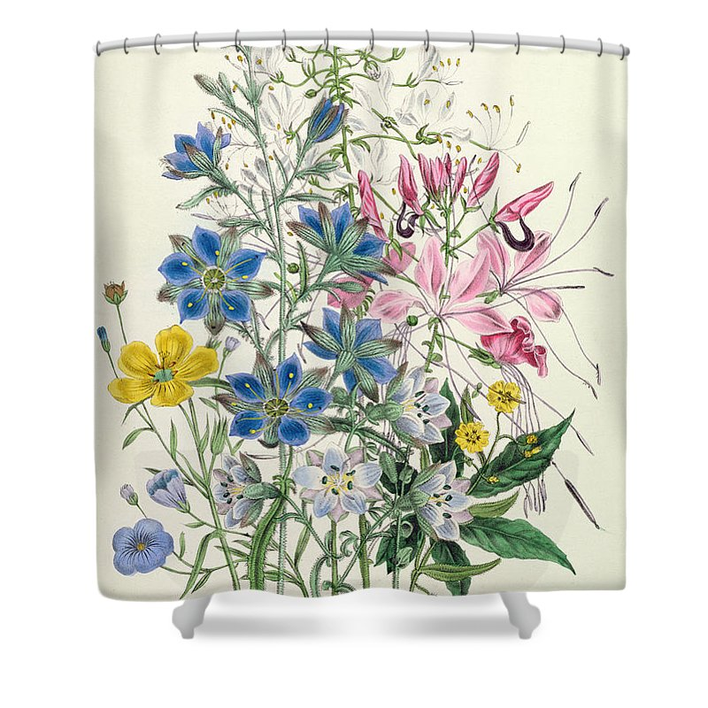 Flowers Shower Curtain featuring the painting Cornflower by Jane Loudon