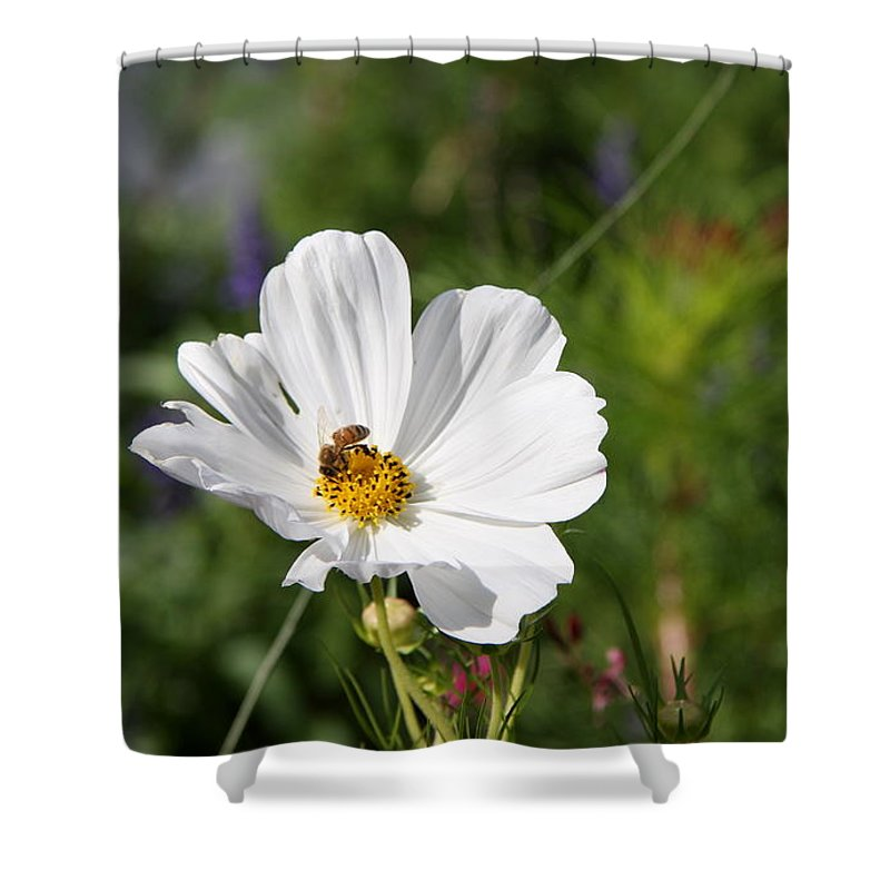 Cosmea Shower Curtain featuring the photograph Cosmea And Bee by Christiane Schulze Art And Photography