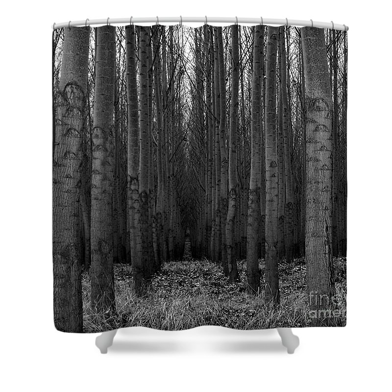 Cottonwood Alley Monochrome Shower Curtain featuring the photograph Cottonwood Alley Monochrome by Chalet Roome-Rigdon