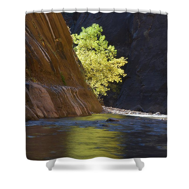 Cottonwood Shower Curtain featuring the photograph Cottonwood On The Virgin River by Brian Boyle