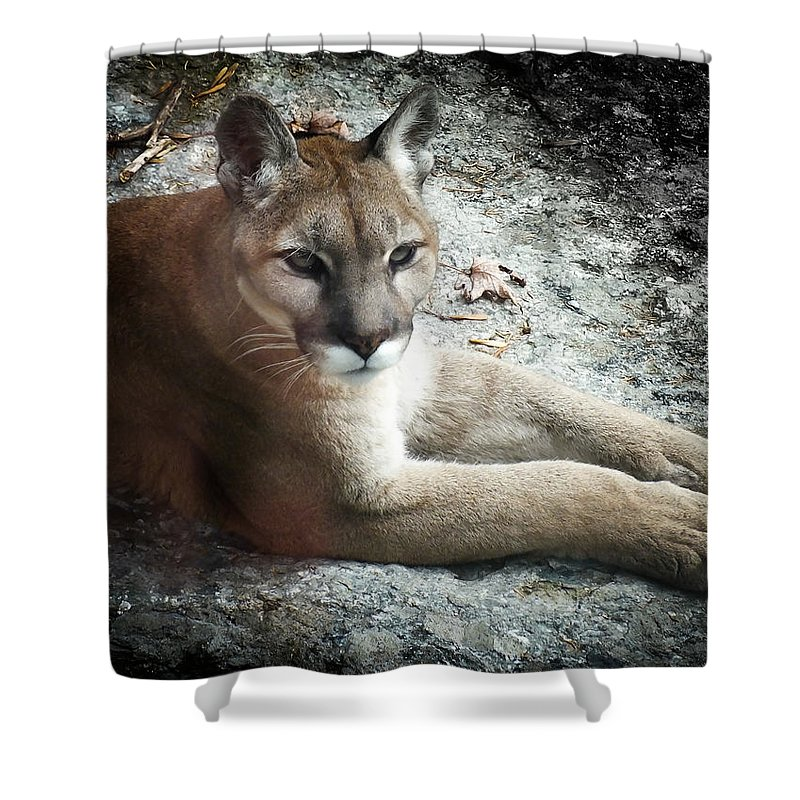 Eastern Cougar Shower Curtain featuring the photograph Cougar Country by Karen Wiles