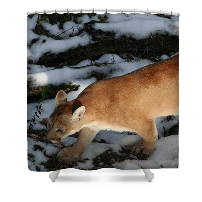 Puma Shower Curtain featuring the photograph Cougar by Roger Look