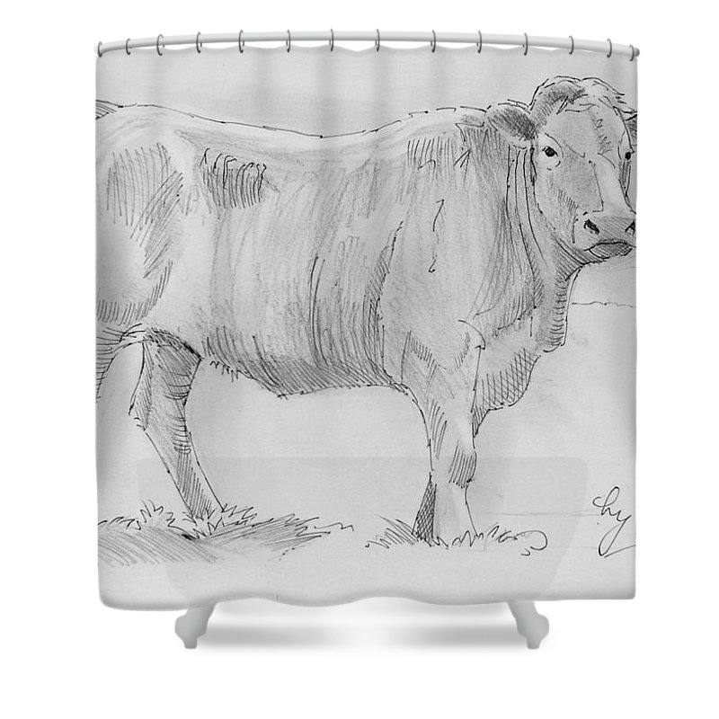 Mike Jory Cows Shower Curtain featuring the painting Cow Pencil Drawing by Mike Jory