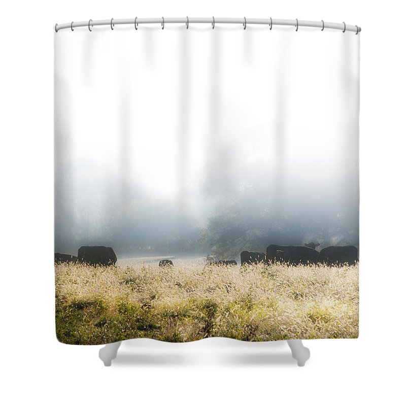 Cows Shower Curtain featuring the photograph Cows In A Foggy Field by Bill Cannon