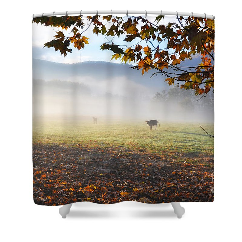 Cows Shower Curtain featuring the photograph Cows In The Fog by Mats Silvan