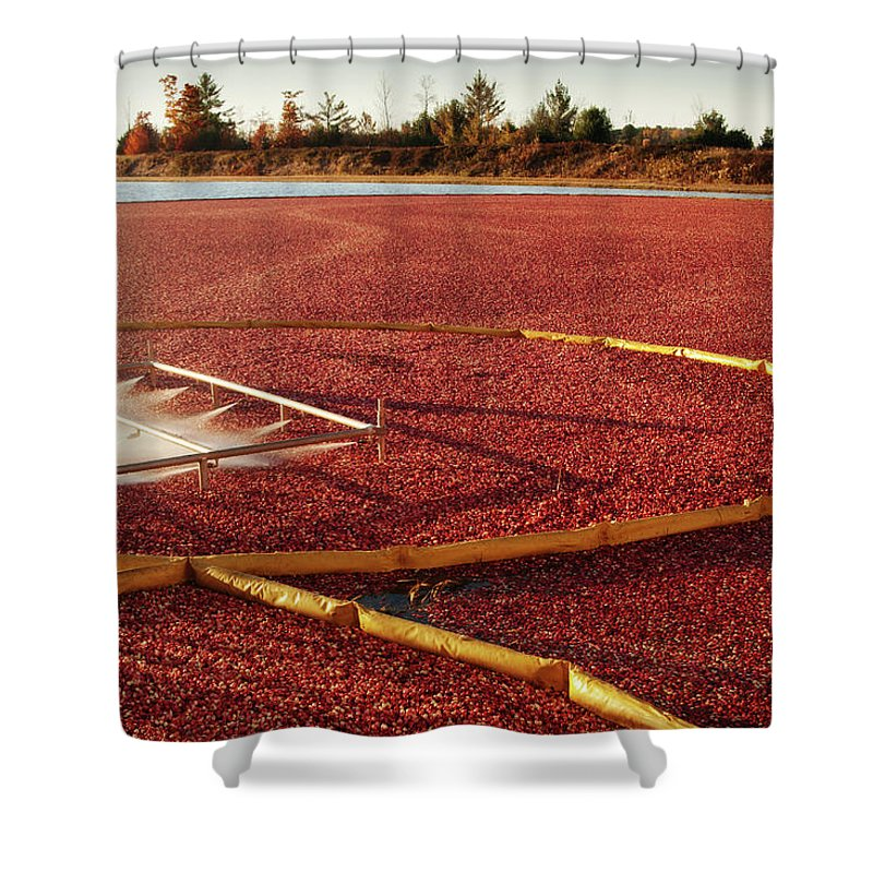 Working Shower Curtain featuring the photograph Cranberry Farm Harvesting For by Yinyang
