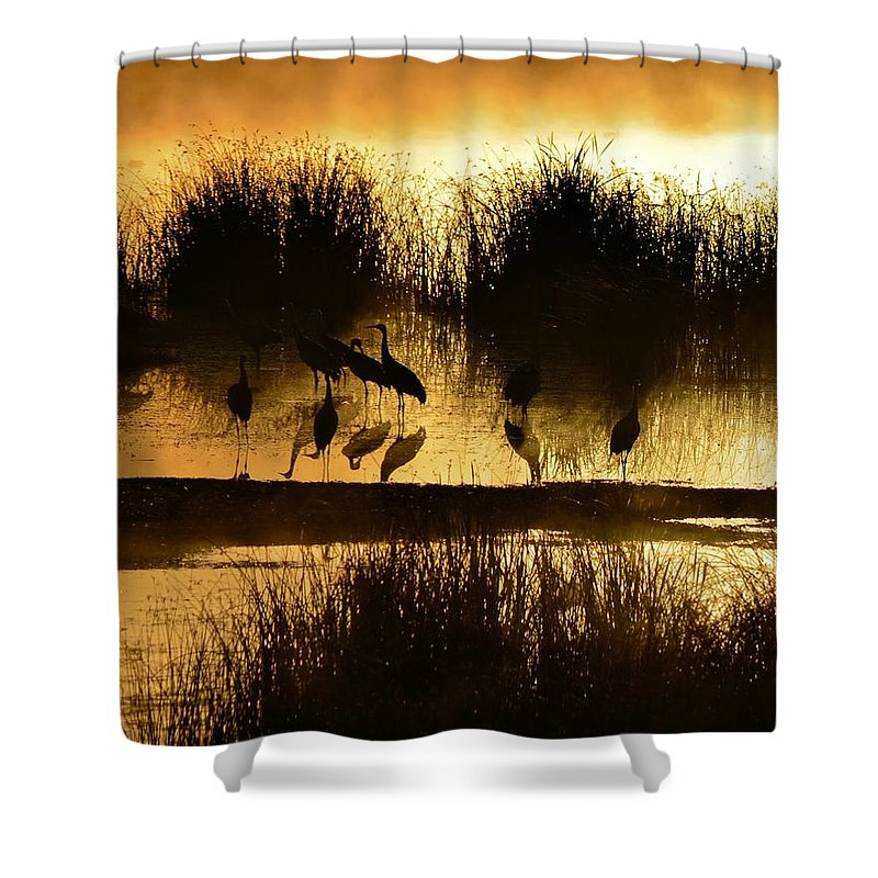 Sunrise Shower Curtain featuring the photograph Cranes On Golden Pond by Whispering Peaks Photography