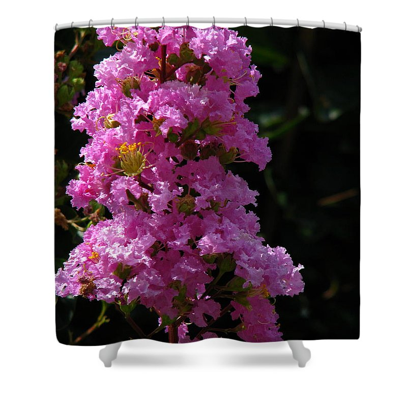 Art For The Wall...patzer Photography Shower Curtain featuring the photograph Crape Myrtle by Greg Patzer