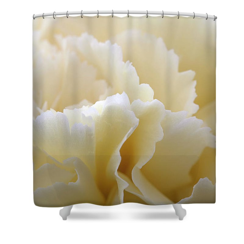 Netherlands Shower Curtain featuring the photograph Cream Coloured Carnation, Close-up by Roel Meijer