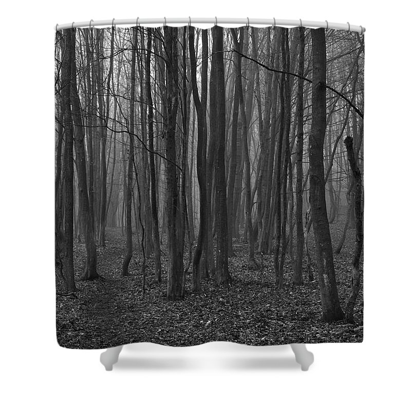 Autumn Shower Curtain Featuring The Photograph Creepy Forest By Ivan Slosar