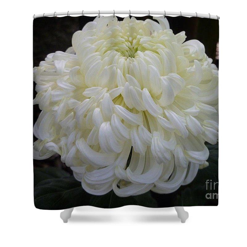Botany Shower Curtain featuring the photograph Creme Au Lait by Lingfai Leung