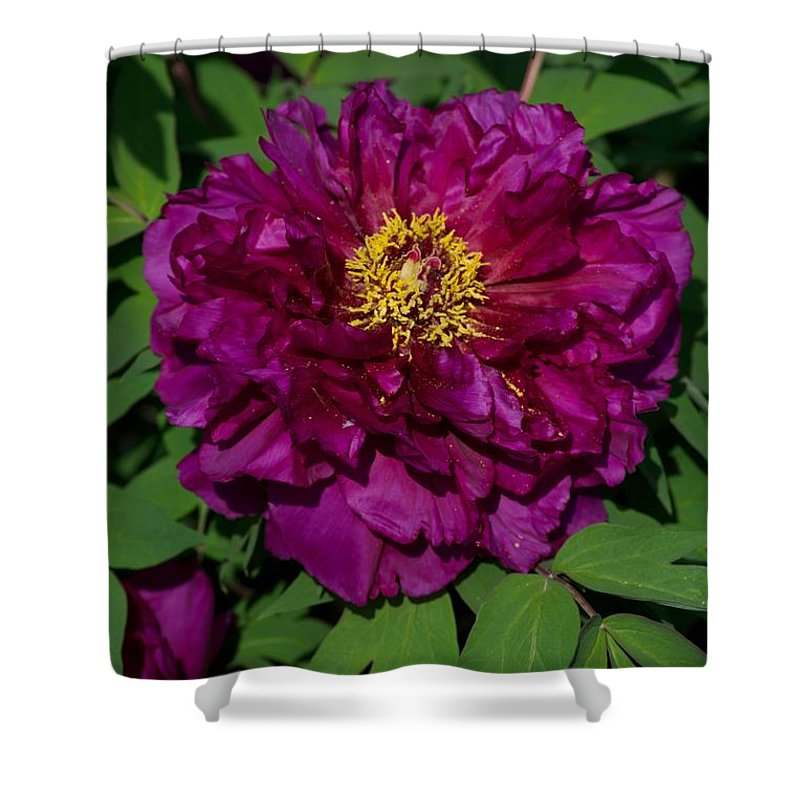 Bloom Shower Curtain featuring the photograph Crinoline by Joseph Yarbrough