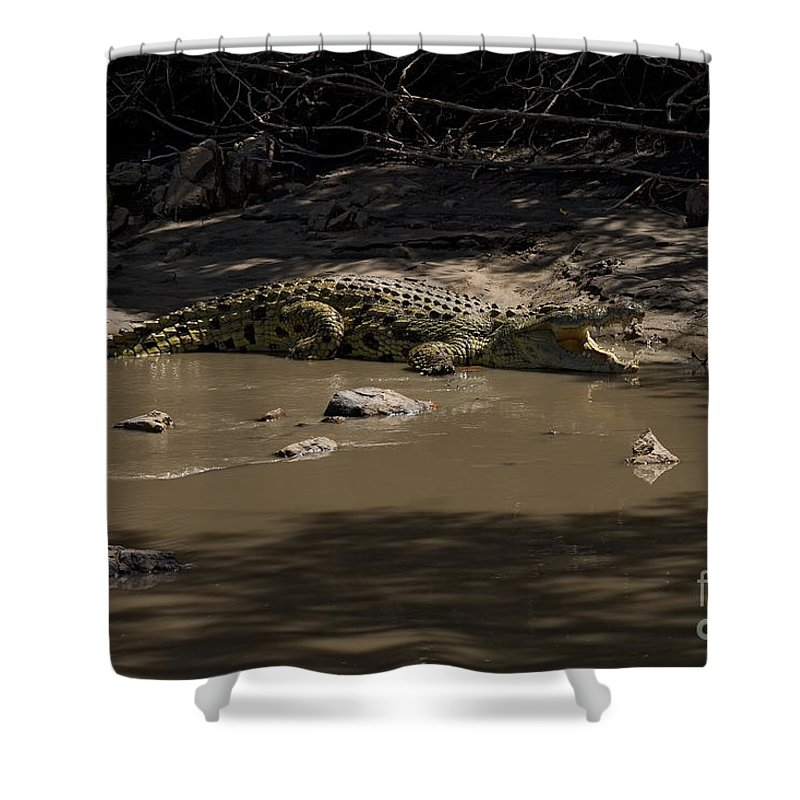 Crocodylus Niloticus Niloticus Shower Curtain featuring the photograph Crocodile  #7282 by J L Woody Wooden