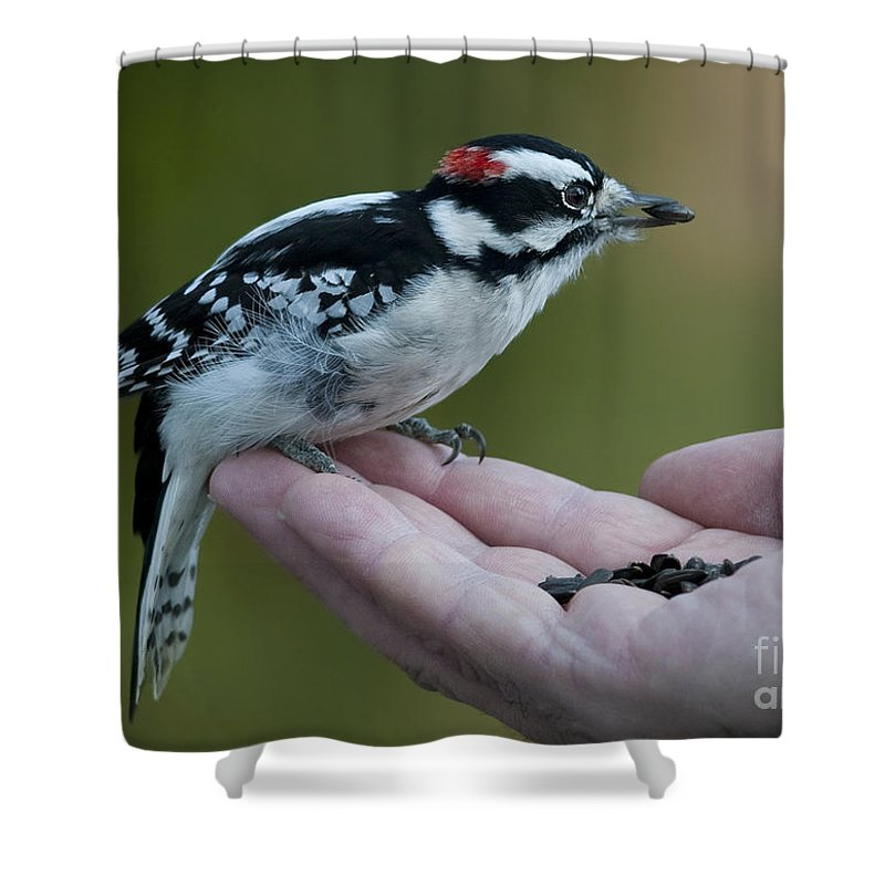 Festblues Shower Curtain featuring the photograph Crossing Borders.. by Nina Stavlund