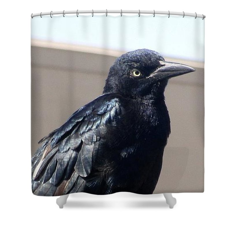 Crow Shower Curtain featuring the photograph Crow by Matthew Kramer