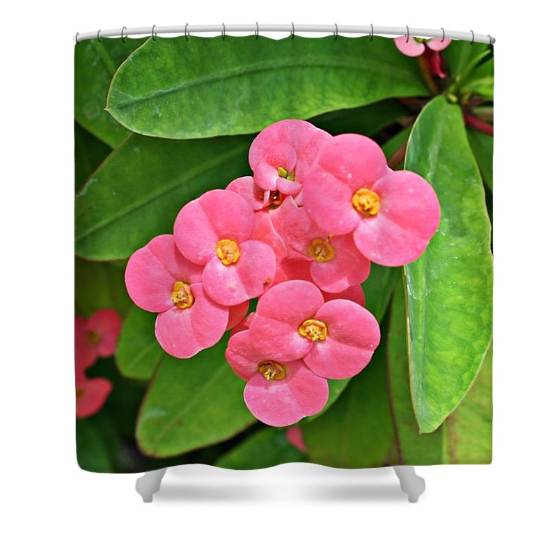 Flowers Shower Curtain featuring the photograph Crown Of Thorns by Marcelo Albuquerque